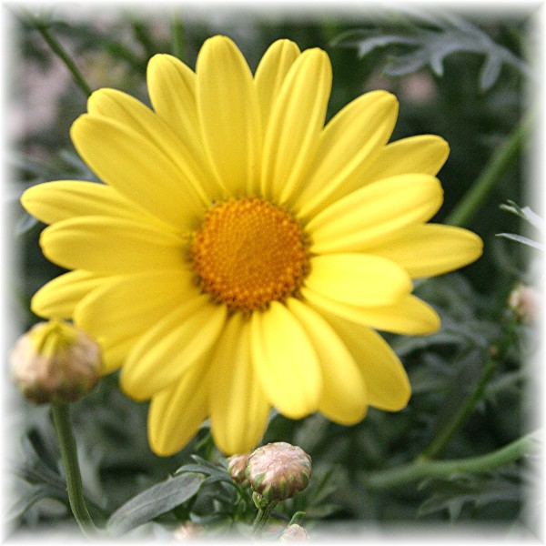 jks-yellow-flower.jpg