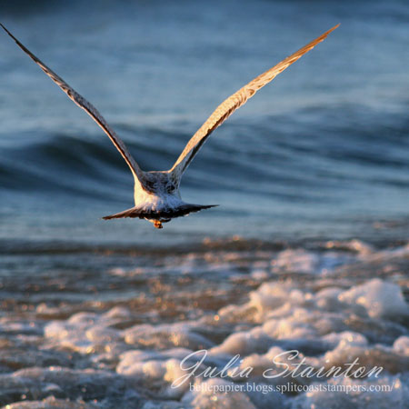 jks-seagull-as-sunset.jpg